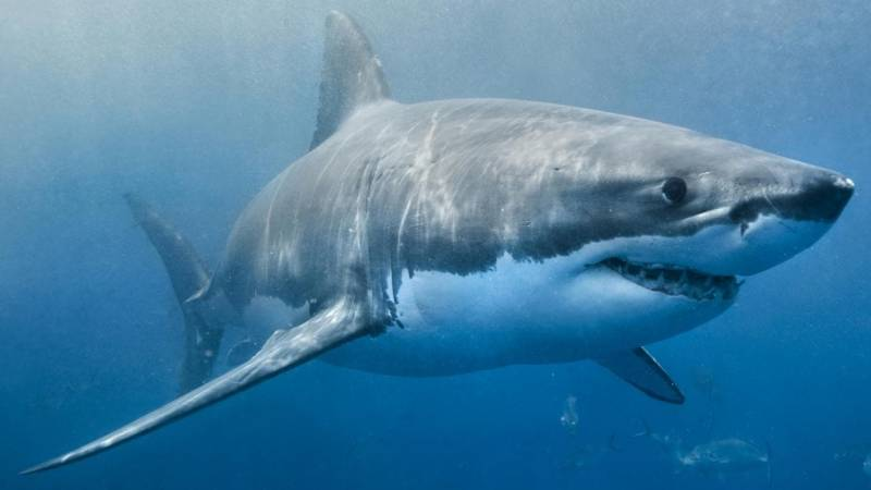 Surfer missing after shark attack off Australian coast
