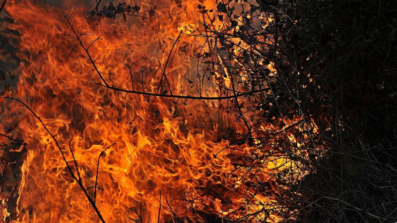 Two dead as forest fires burn in Syria, Lebanon