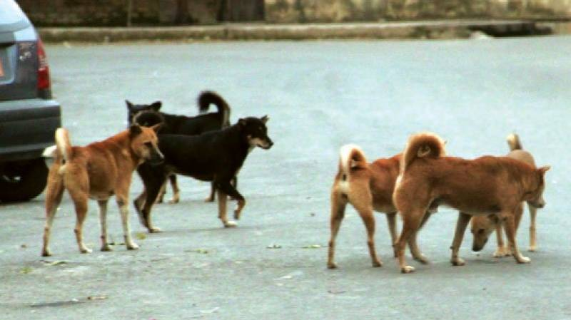 Stray dogs kill two more children