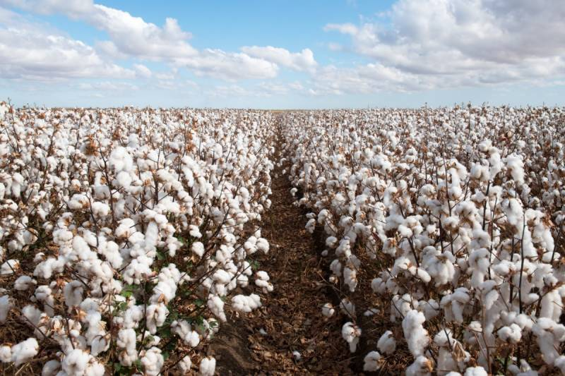 China tells mills to avoid buying Australian cotton