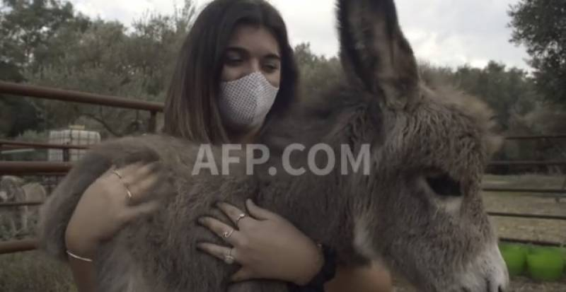 Donkey therapy eases Spain medics' stress