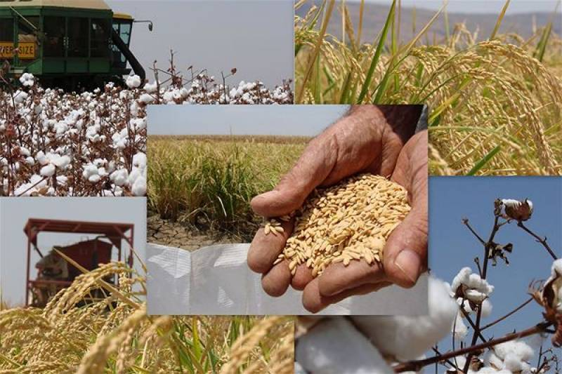 Raw cotton export down by 97%, rice by 23%