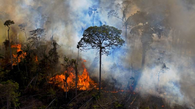 Record fires ravage Brazil's Amazon and Pantanal regions