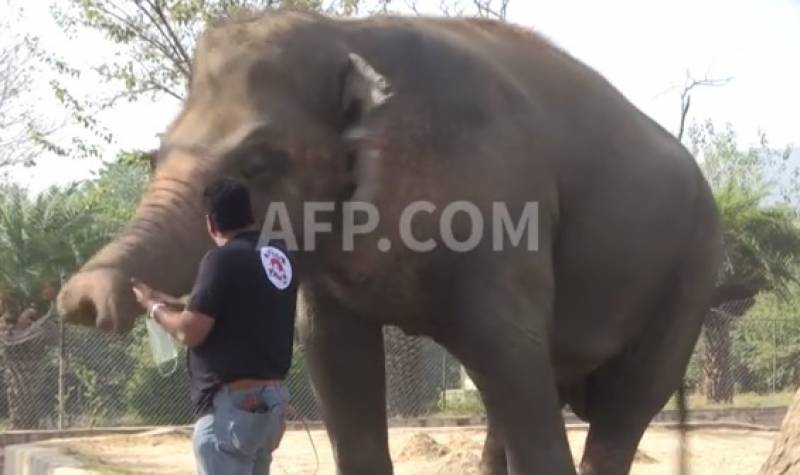 Kaavan waiting for permit to travel to Cambodia