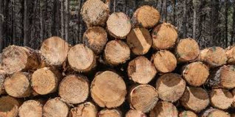 China confirms ban on some Australian timber imports
