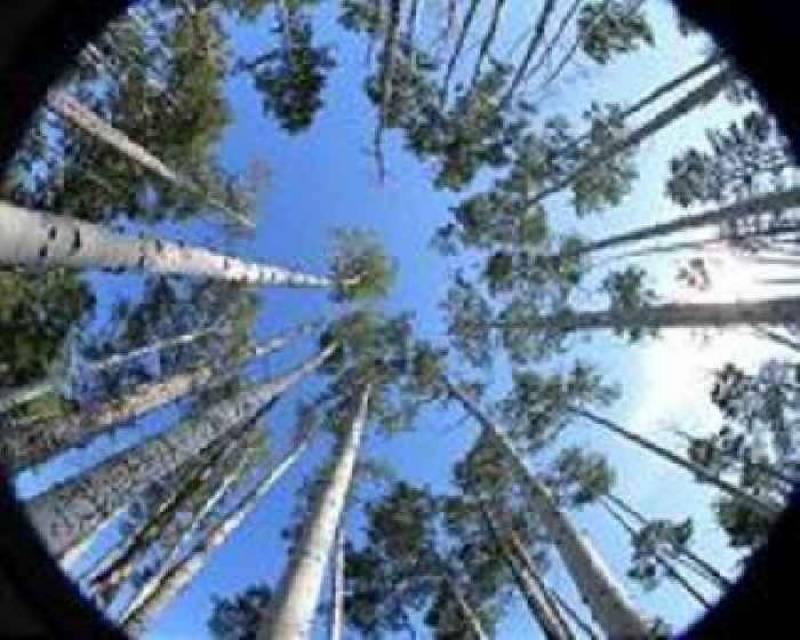 Los Angeles and Google partner on 'Tree Canopy' project