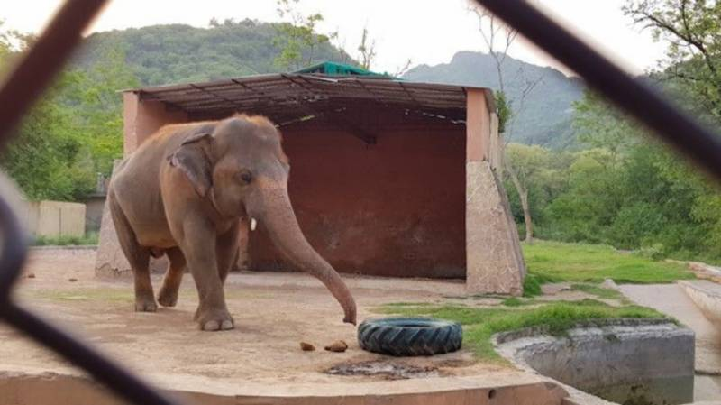 Kaavan from Islamabad Zoo all set to leave for Cambodia