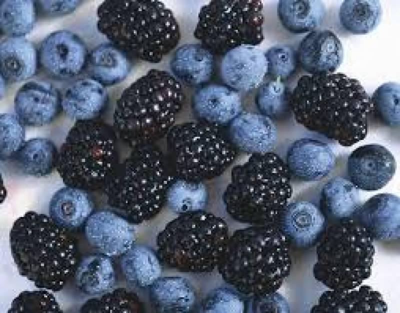 Demand for South African 'superfood' blueberries booming