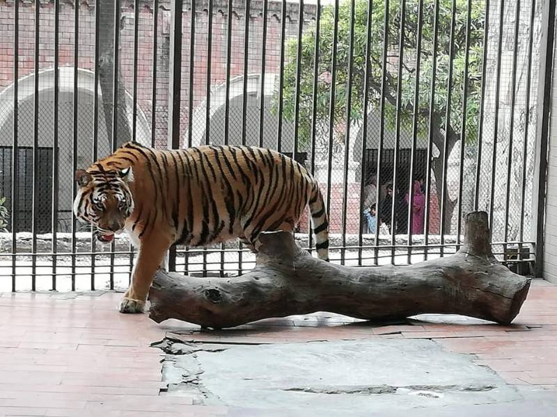 Lahore Zoo, parks tickets to cost 150% more