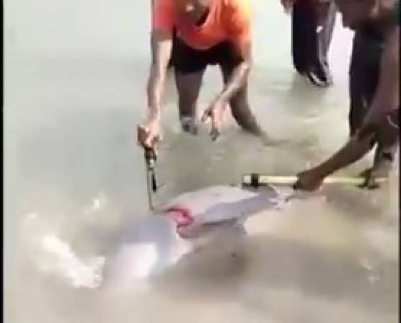 Rare Ganges River dolphin beaten to death in India