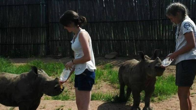 Orphaned rhinos find safe refuge in S.Africa sanctuary