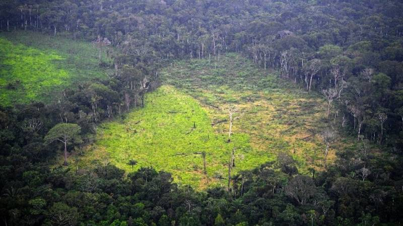 Forest loss 'hotspots' bigger than Germany: WWF