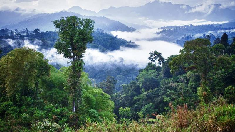 Forests may flip from CO2 'sink' to 'source' by 2050