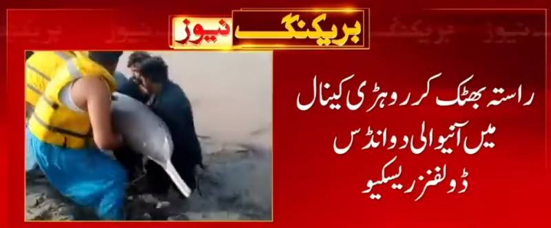 Two blind dolphins rescued into Indus River