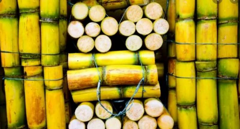 LHC declares 'right' selling sugarcane to other provinces