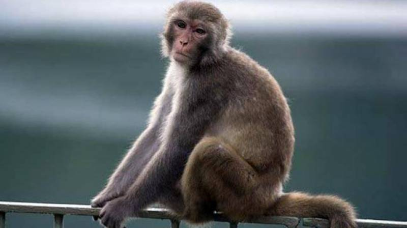India police probe baby's death in alleged monkey attack