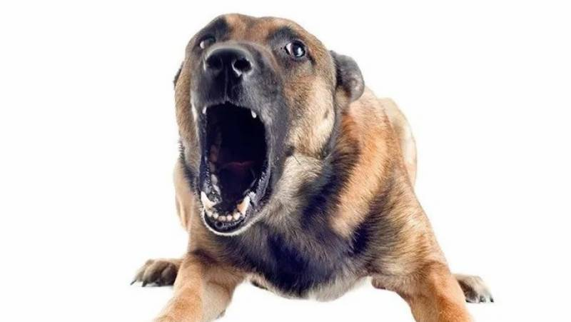 Landlord unleashes dog on child labourer