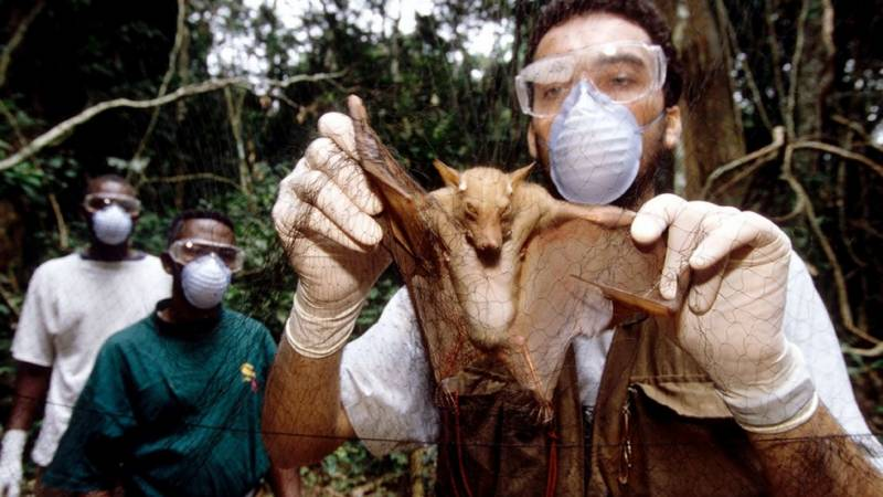 Virus likely jumped to humans from bats through 'missing link' animal: WHO report