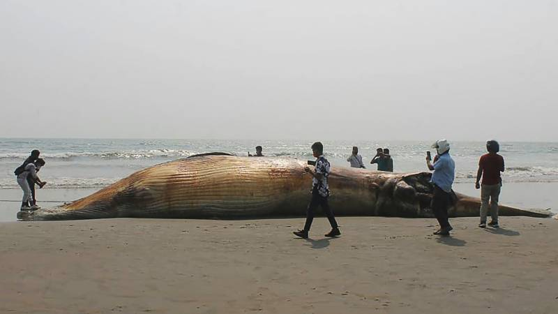 Two dead whales wash up on Bangladesh beach