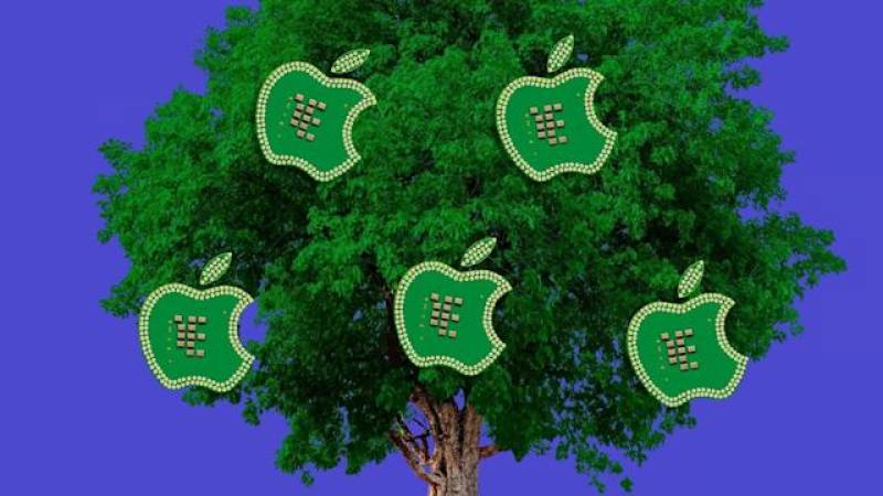 Apple announces $200m forestry fund to reduce carbon