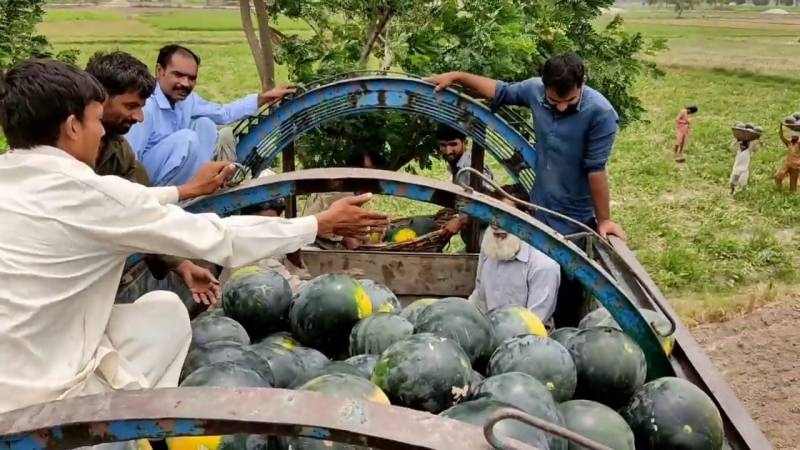 3 die as melon truck crushes motorcyclists
