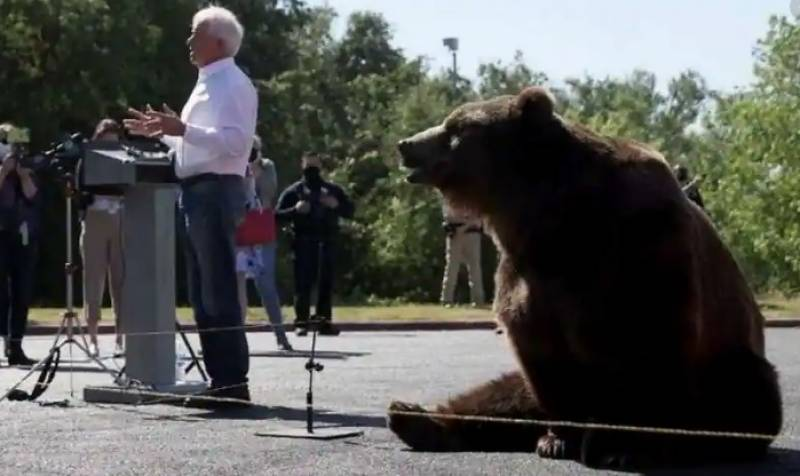 California governor candidate brings bear to rally