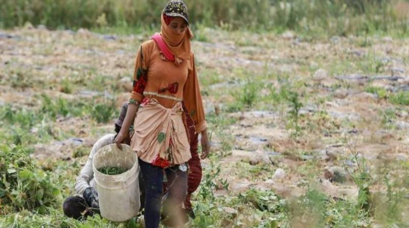 Drought-hit Jordan 'critical' as water sources dry up
