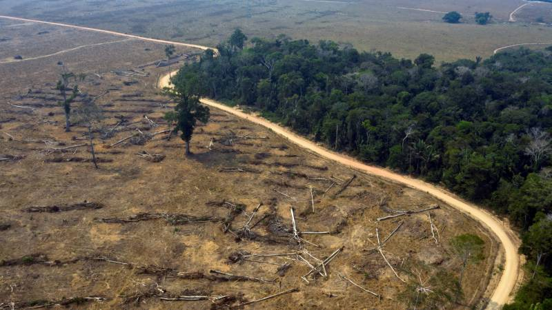 Outcry over Brazil bill relaxing environmental rules