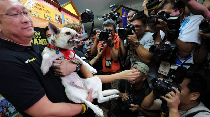 'Hero' dog credited with saving two girls in the Philippines dies