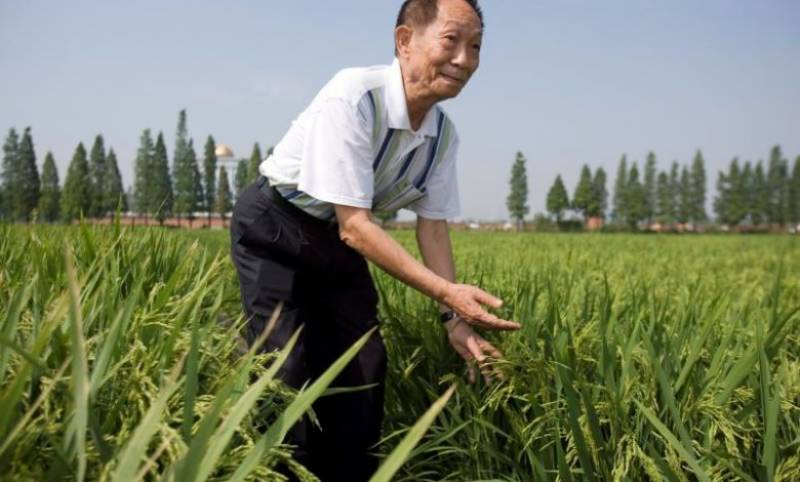 China's 'father of hybrid rice' dies