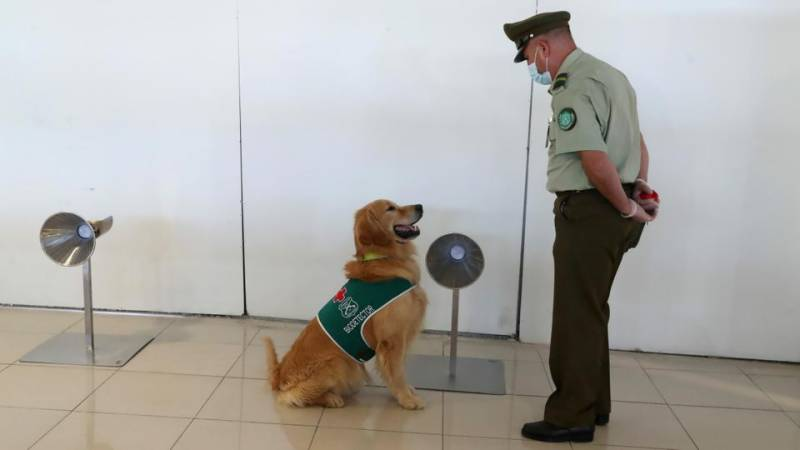 Study shows dogs can detect Covid-positive arrivals