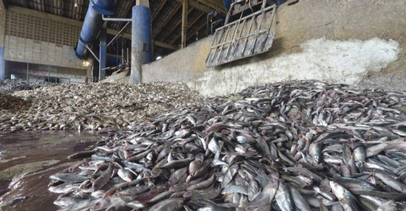 West African fish meal exports undermine food security: Greenpeace