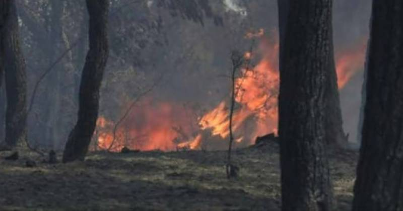 No success in dousing Chitral forest fire