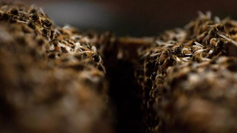 German climate, insect protection laws cross finish line