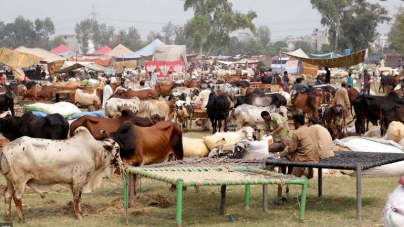 Vaccine jabs mandatory for traders, staff of Eid cattle markets