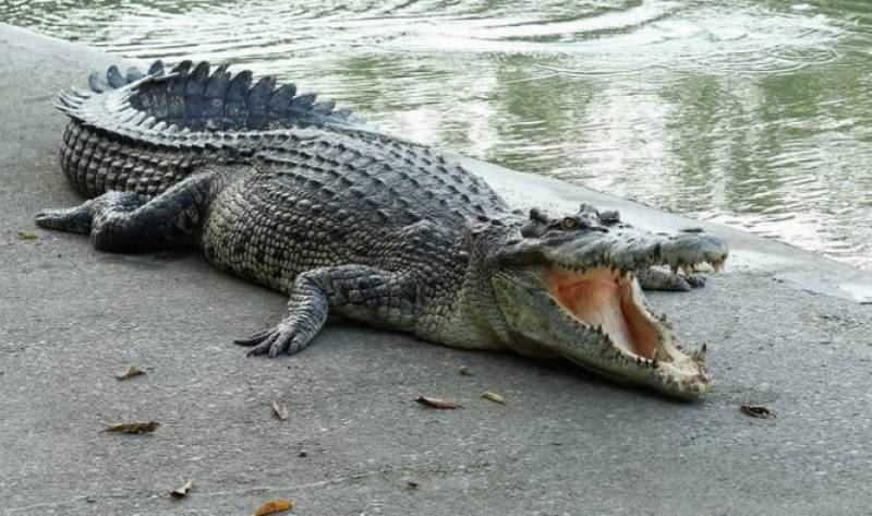 Four-year-old girl eaten up by crocodile in Sukkur
