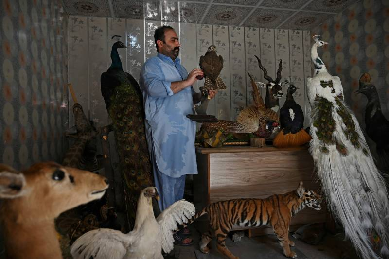 Bereaved pet owners turn to taxidermy in Pakistan