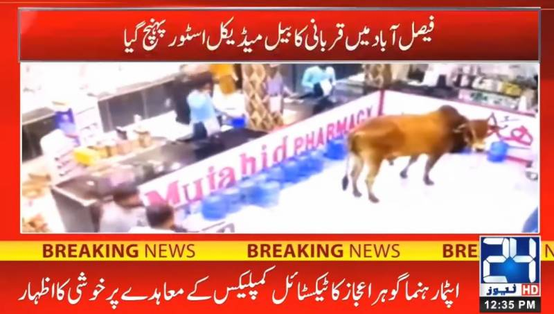 Charged bull storms into medical store in Faisalabad