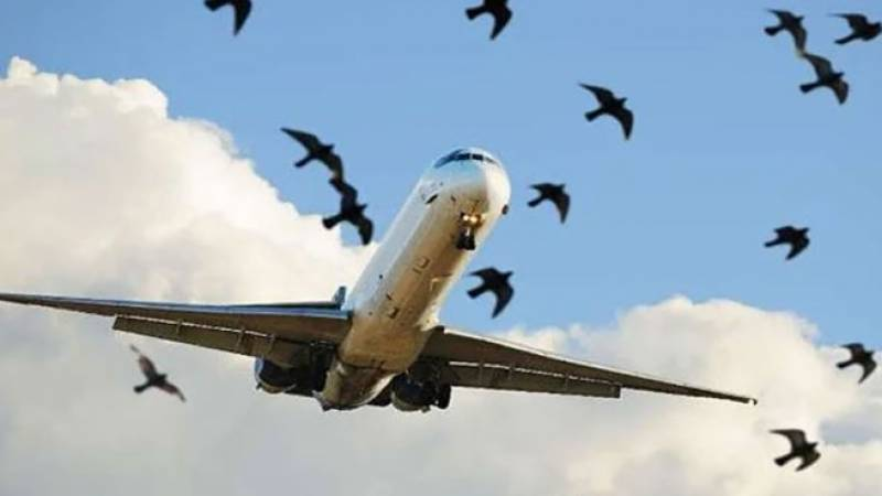 Plane makes emergency landing at Lahore airport after hitting bird