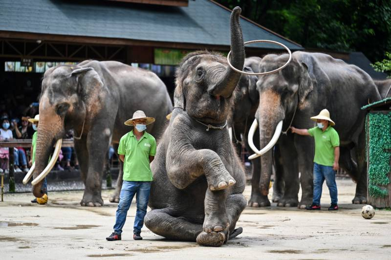 China villagers learn to live with the elephant in the room