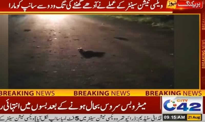 Big snake spreads panic at Lahore's vaccination centre