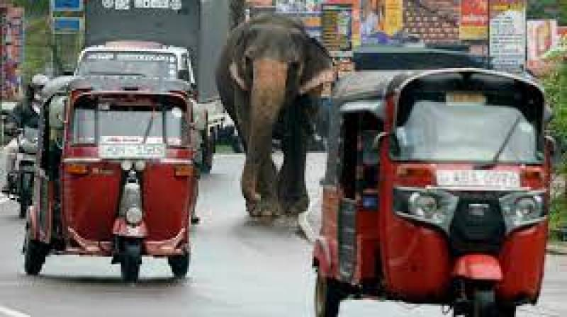 Sri Lanka bans 'drunk driving' of elephants in new protection law