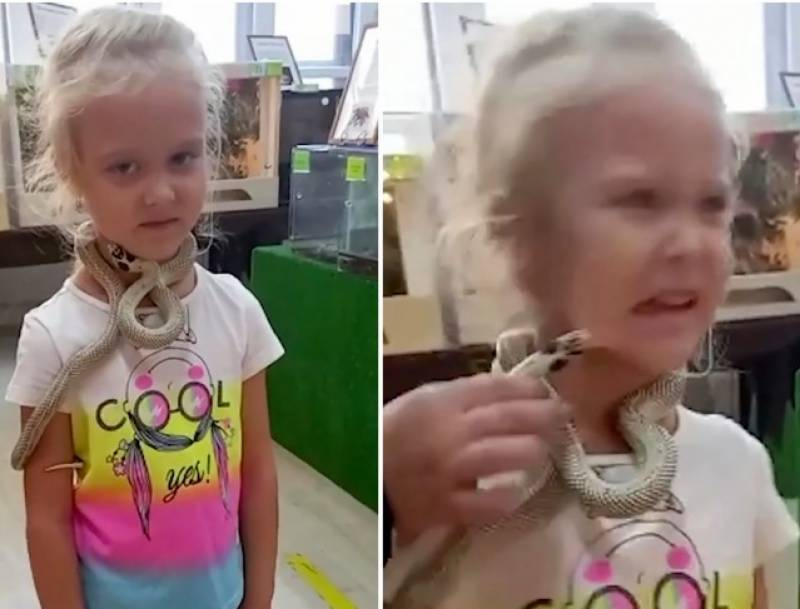 Little girl bitten on face by venomous snake at Russian petting zoo