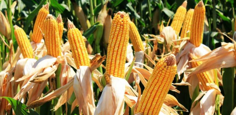 Corn cooking oil price raised by Rs370 per litre