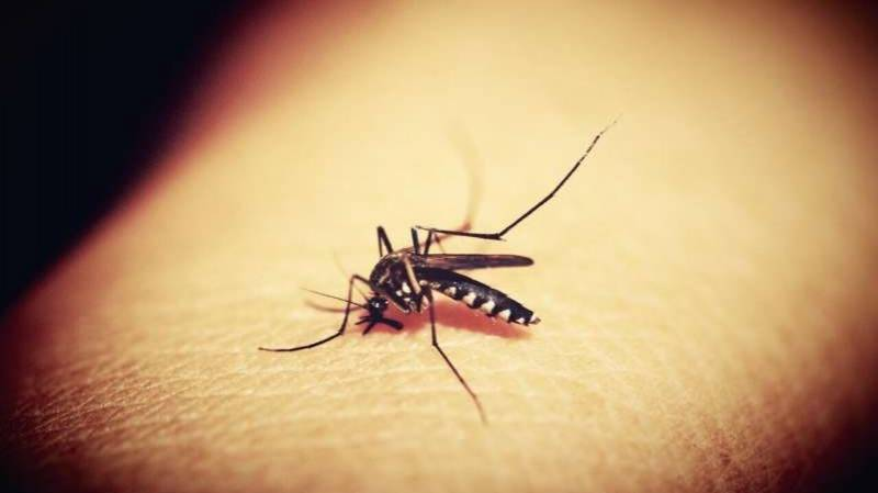 WHO recommends use of first malaria vaccine for children