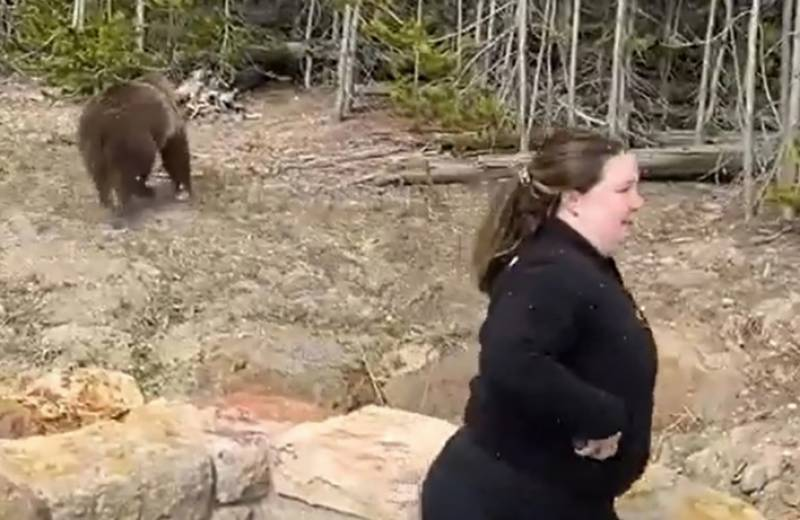 US woman jailed for too-close bear photo